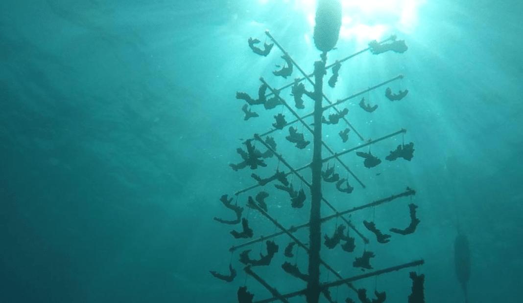 dive-operator-spends-lockdown-repairing-coral