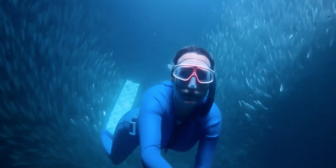 south-african-freediver-captures-some-really-cool-sardine-run-footage