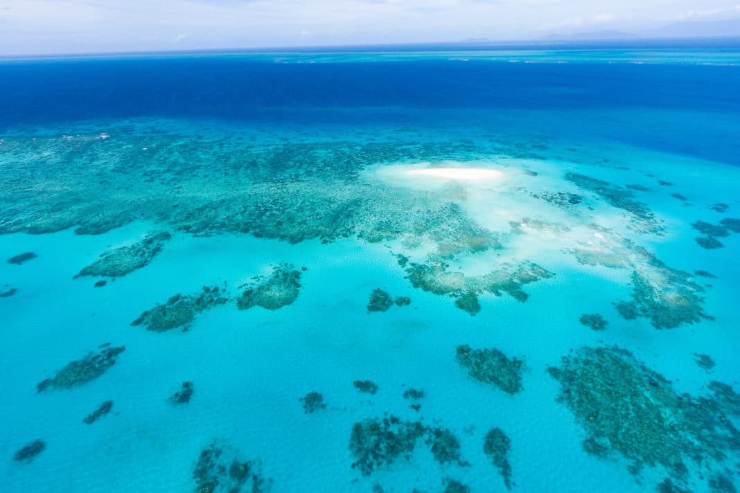 scientists:-great-barrier-reef-has-lost-more-than-half-its-corals