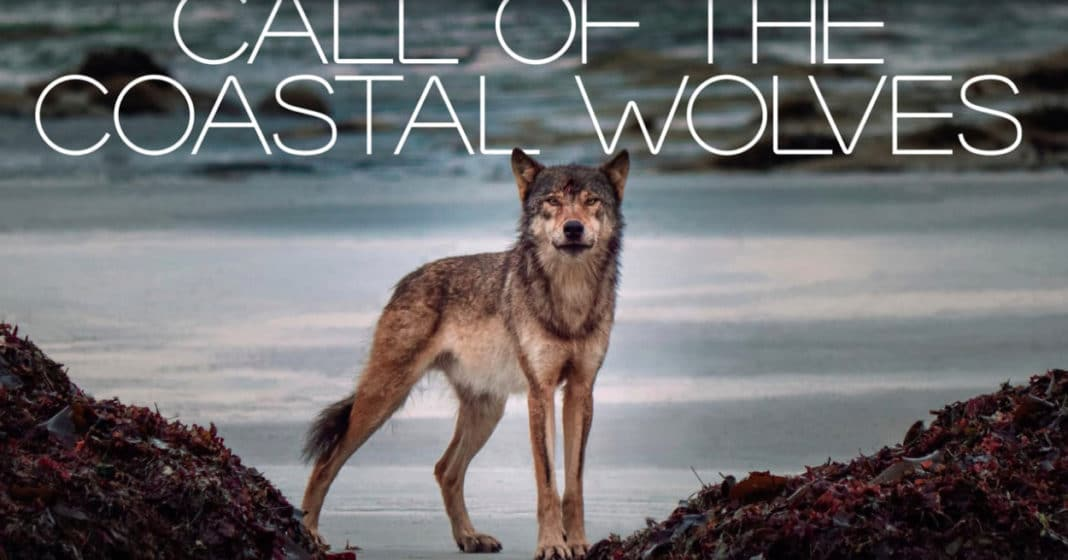 mini-documentary-'call-of-the-coastal-wolves'-is-now-available-for-viewing