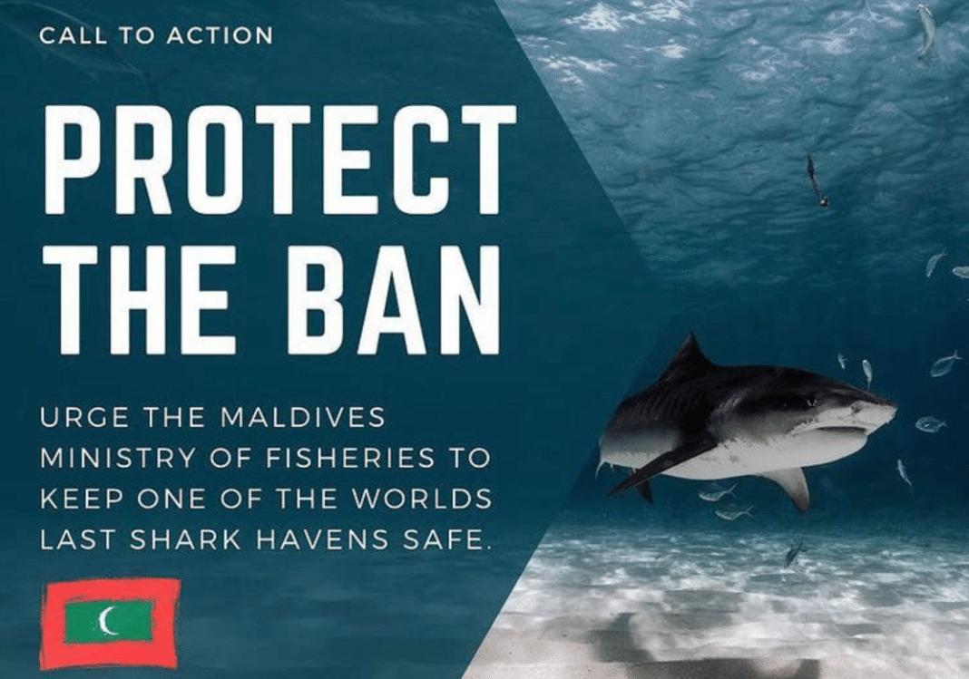 activists-want-the-maldives-to-keep-its-prohibition-on-shark-killing