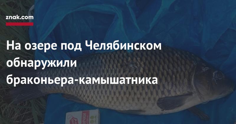 На-озере-под-Челябинском-обнаружили-браконьера-камышатника