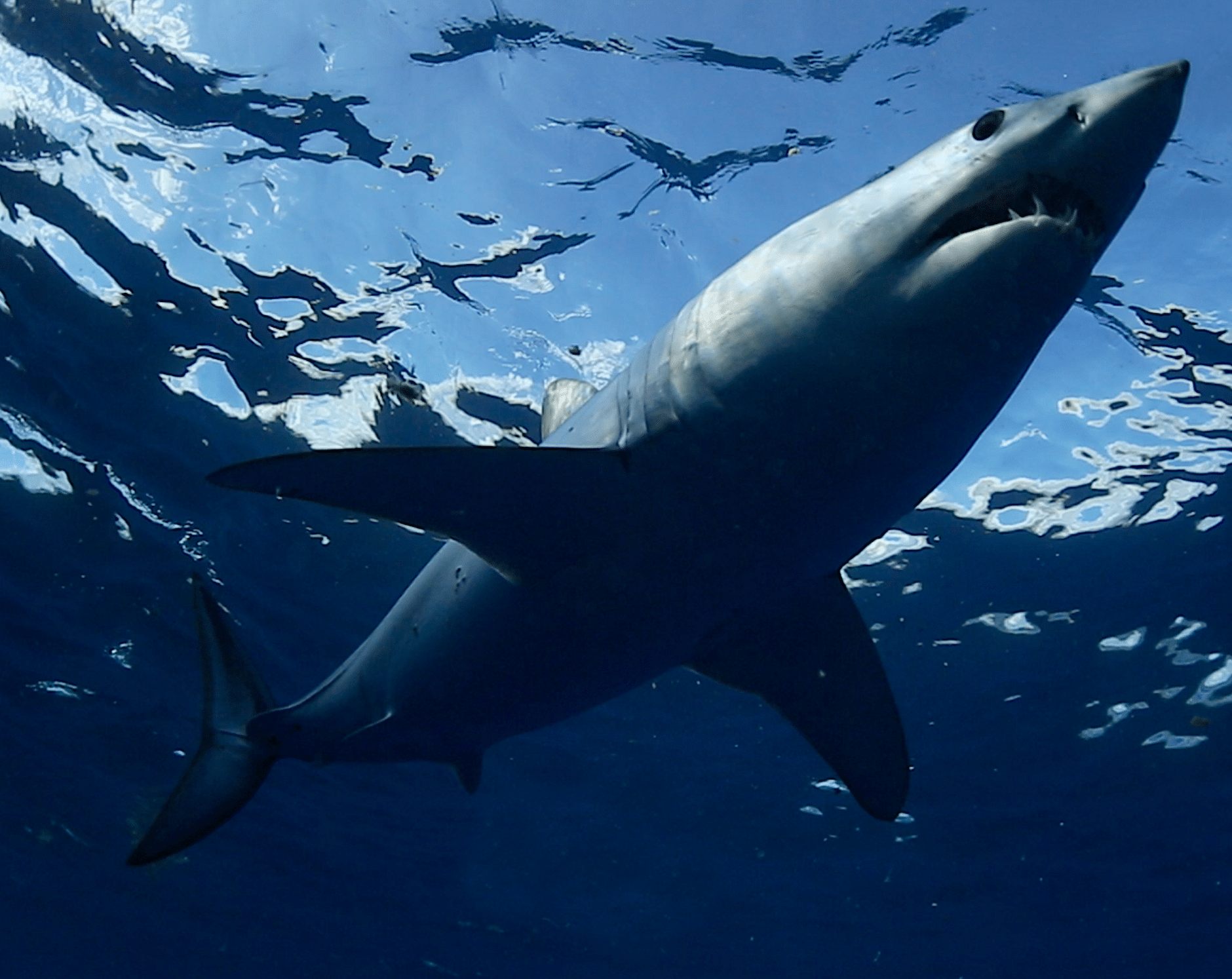 the-winners-of-the-great-shark-race-have-been-announced